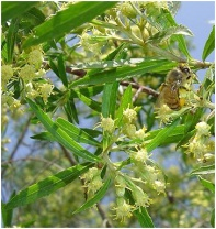 manfaat propolis khasiat propolis obat propolis www.manfaatpropolisgoodfit.wordpress.com 082218120457